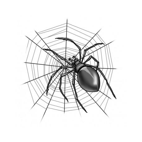 The web ( il gioco del ragno e la ragnatela )